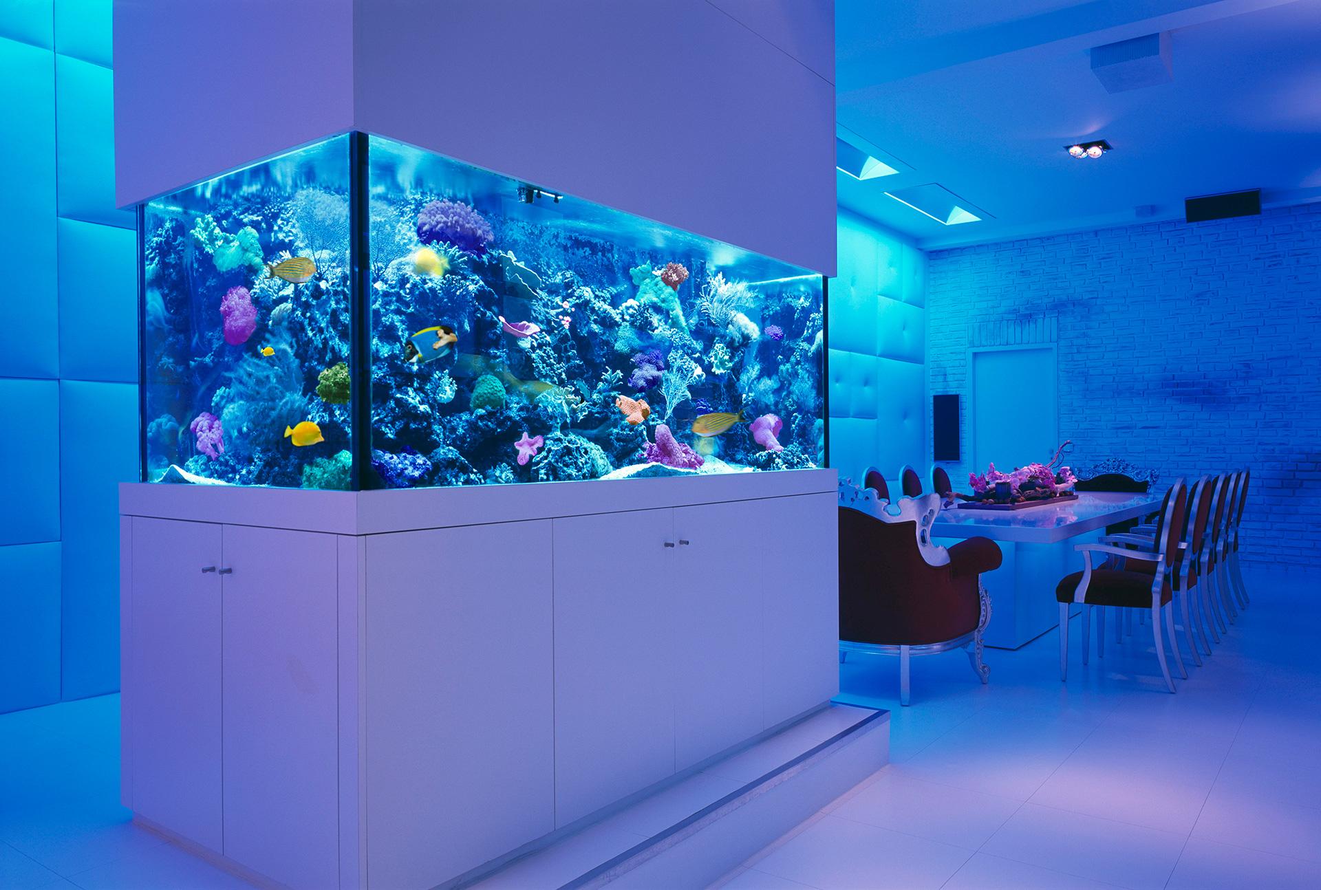 Exclusive Luxury Custom Aquariums And Ponds Design By Okeanos Aquascaping Blog Purentonline