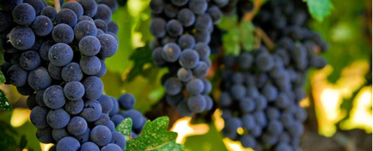 Santa Barbare Wine country