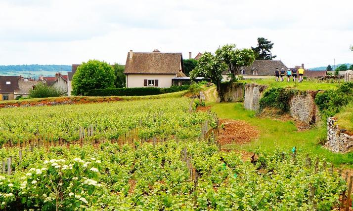 Burgundy Bike Tour cycling vacation France 04