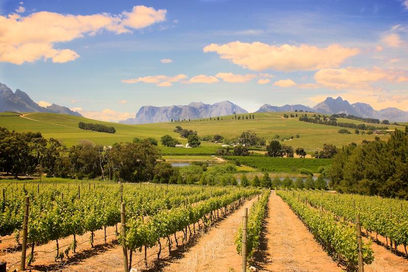 Stellenbosch Wineyard South Africa